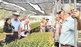 HCM-Ville développe l'agrotourisme dans les districts périurbains