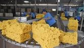 Exportations de plus de 340.000 tonnes de caoutchouc au 1er trimestre