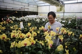 Hô Chi Minh-Ville a de forts potentiels d'exportations d'orchidées