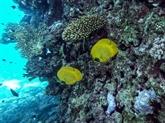 Le regain du tourisme menace les coraux de lamer Rouge