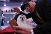 Chine: un concours canin ciblé par des militants anti-viande