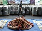 Lutte contre le braconnage: la Malaisie détruit près de 4 tonnes d'ivoire