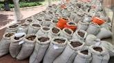 Singapour saisit près de 13 tonnes d'écailles de pangolin