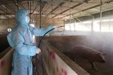 Hoà Binh déclare la fin de la peste porcine africaine