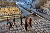 Exportation: 38% du volume de riz du Vietnam expédié aux Philippines