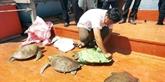 Relacher des tortues rares dans la nature