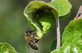 L'agroforesterie étend ses racines en France et dans le monde