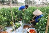 Le Brésil et le Vietnam doivent agir pour exploiter leur potentiel commercial
