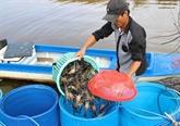Exportations de crevettes au Japon: le Vietnam toujours leader