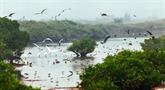 Lutter contre l'érosion de la biodiversité au Vietnam