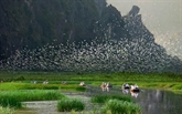 La réserve naturelle submergée de Vân Long devient le 9e site Ramsar du Vietnam