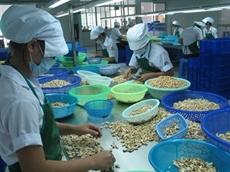 Les exportations de noix de cajou en hausse