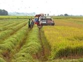 La Côte d'Ivoire renforce la coopération avec Cân Tho dans l'agriculture