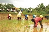 La fête de descente aux champs des Khmers