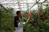 De belles fleurs roses retiennent les touristes à Dà Lat