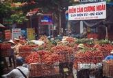 Hai Duong vise à récolter 40.000 tonnes de litchis en 2019