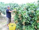 Cân Tho et Vientiane renforcent leur coopération