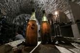 Le cépage à l'origine du vin jaune du Jura vieux d'au moins 900 ans