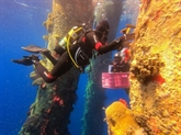Mer Rouge: des scientifiques israéliens en sauveurs de coraux