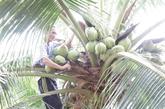 E-commerce: des spécialités rurales sur Lazada et Amazon