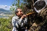 L'homme qui récoltait les abeilles à Hong Kong