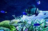 UE: adoption d'une nouvelle législation visant la conservation des ressources halieutiques