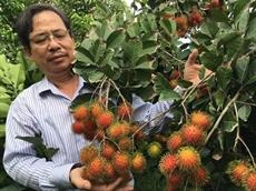 Nouvelle tendance, nouvelles opportunités pour le ramboutan du Vietnam