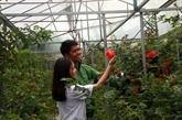 Agoda dévoile la liste des destinations estivales pour les Vietnamiens