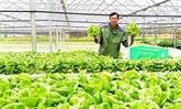Lâm Dông exporte des légumes hydroponiques en République de Corée