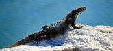 Europol: sauvetage de milliers de reptiles destinés à finir en sac à main