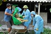 Le PM veut redoubler d'efforts contre la peste porcine africaine