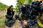 L'agriculture biologique française a connu une