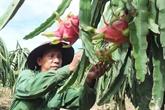 La Nouvelle-Zélande soutient le Vietnam dans les exportations du fruit du dragon