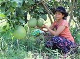 Ninh Thuân développe des arbres fruitiers résistants à la sécheresse