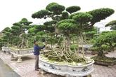 Vi Khê, berceau de l'horticulture