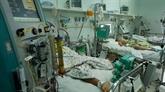 La dengue devrait continuer à s'étendre en raison des températures élevées