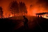 Portugal: 20 blessés dans un vaste incendie de forêt, un suspect arrêté