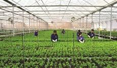 Mesures pour attirer plus dinvestissements dans lagriculture