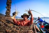 Les exportations nationales de crevettes pourraient retrouver des couleurs au 2e semestre