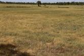La sécheresse frappe le secteur du riz