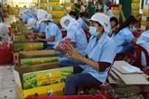 Exportations de fruits et légumes en hausse de 3,9% au premier semestre