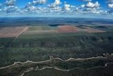 Déforestation plus réchauffement: addition mortelle pour la vie sauvage