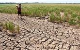 Le delta du Mékong sera confronté à la salinité et aux sécheresses