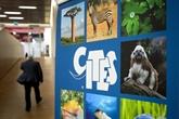 Repenser les règles du commerce pour protéger les espèces en danger