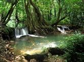 Thaïlande : nouveau plan de boisement pour réduire les coûts