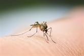 Les Philippines recensent plus de 188.000 cas de dengue en huit mois