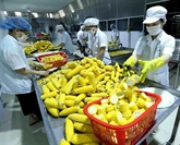 EVFTA: opportunités et défis pour l'agriculture