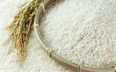 Thaïlande: nouveau plan comme alternative à son système de garantie des prix du riz