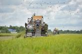 Thaïlande: approbation d'un budget pour garantir les prix du riz et de l'huile de palme