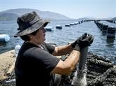 Réchauffement climatique: la moule de Butrint meurt de chaud